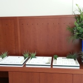 Entry table with seating cards to greet the guests.