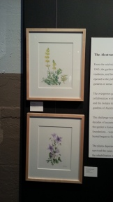 Watercolors in the Alcatraz Florilegium exhibit, November 15, 2013.