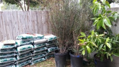 So many bags of soil!