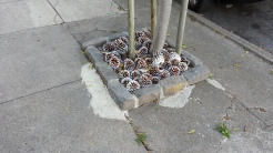 Deterrence: Pine cones for an uncomfortable surface.