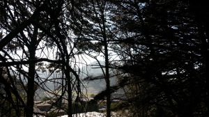 Mt. Davidson, through a stand of pines where Market turns to Portola.