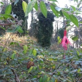 A fuchsia along the trail.