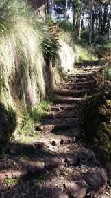 Old stone staircases, with grasses cascading down the cliffs from overhead.