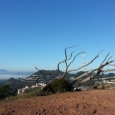 A cool skeletal fallen eucalyptus on the edge of the barren eastern vista points.