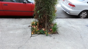 """Tolerance: Planting """"disposable"""" plants. This was pretty and flowery last week."""