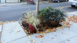 Exclusion: Double duty! Fence around potted plants.