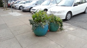Exclusion: Pots to elevate the plants above the danger zone.