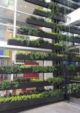 Interesting take on vertical gardening, next to the Container Store at 22 Fourth.