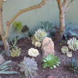 The agaves in the back corner do the trick of hiding a cement pad, and add a bright splash of blue-grey.