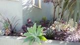 It already looks like a fuller garden!
