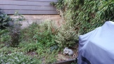 Before: A mish-mash of plants occupy a small corner of the yard, and the grill to the right is on a concrete pad at ground level, inconveniently distant from both kitchen and seating.