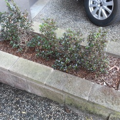 Before: A very uneventful streetside planter.