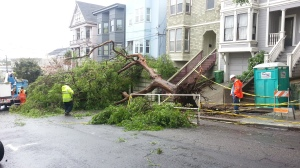 Fallen elm on Hartford
