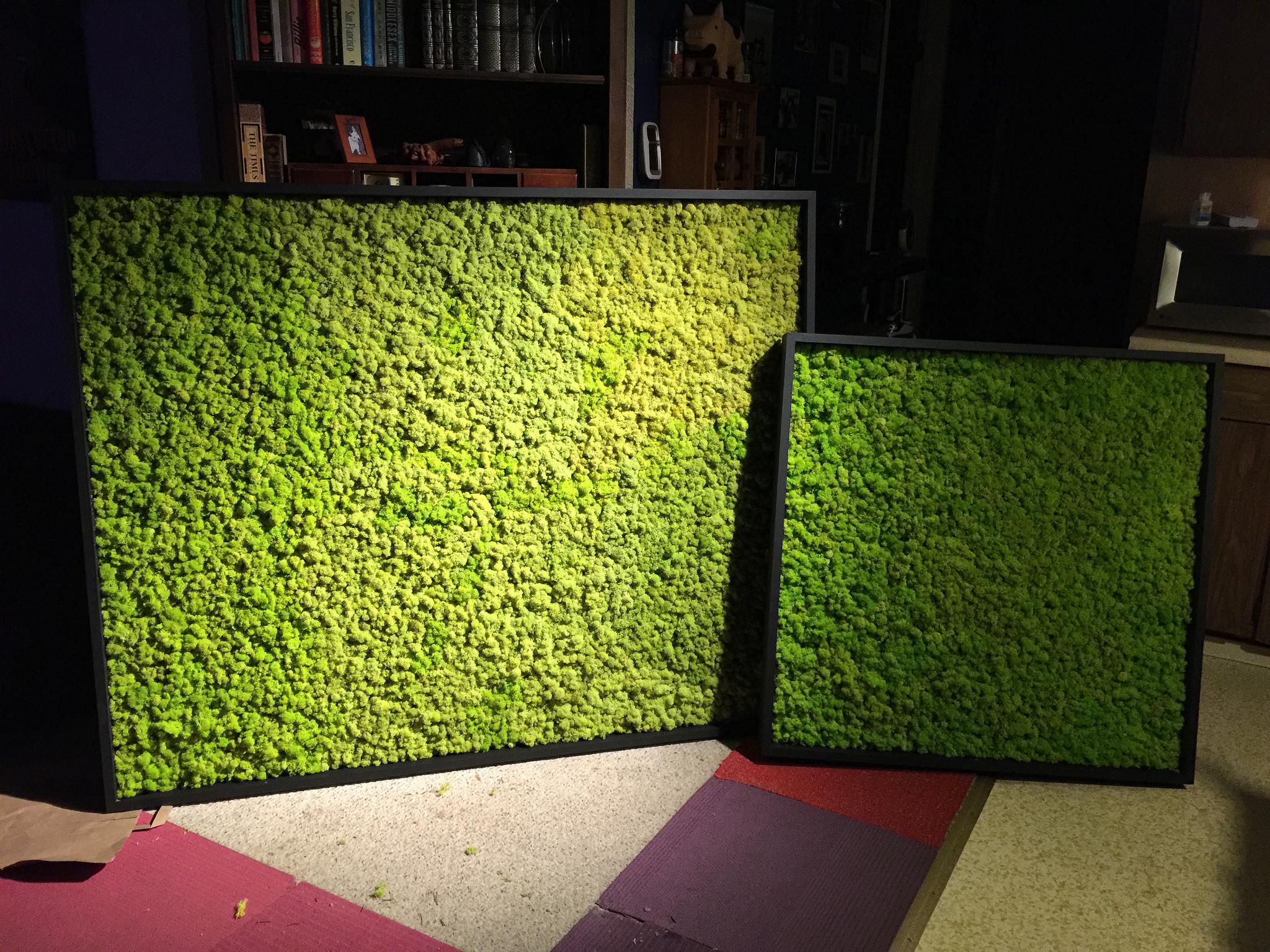 Bozannical Design Installation Reindeer Moss Wall